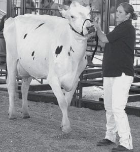 the family dairy cow,