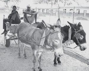 Becca Rupp found unique ways to aid the rural South African village she lived in for two years as a Peace Corps volunteer. Take the donkey cart race fund-raiser she organized. High school boys like the two shown here registered carts, elementary kids bought tickets, and prizes awarded