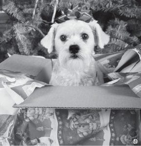 Cute and cuddly, pets can be a great addition to the home, though the holidays can be a difficult time to welcome a new four-legged member to the family.