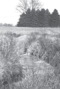 Even with below-freezing temperatures, water was still flowing through this drainage ditch east of Archbold in this photo taken Sunday, Jan. 3. Adopting their winter colors, most of the plant life adopts a uniform brown, except for the evergreens, which protest by remaining green year around.– photo by David     Pugh