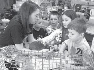 Taylor Kruse exhibits her rabbit to teach Pettisville students about animal safety during Animal Day– courtesy photo