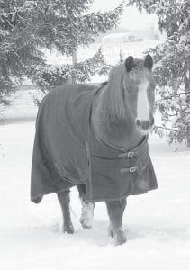 This horse was wearing a blanket Sunday, Feb. 6, as it walked through the snow at a home along US20A east of Burlington- Elmira. The Archbold Wastewater Treatment plant recorded five inches of snowfall on Saturday; about 12 inches of snow has coated the area since Monday, Jan. 31.– photo by Michelle Pugh