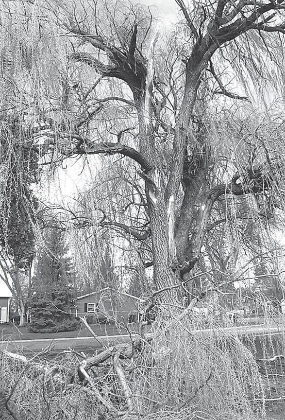 Lightning Splits Brussel Street Tree