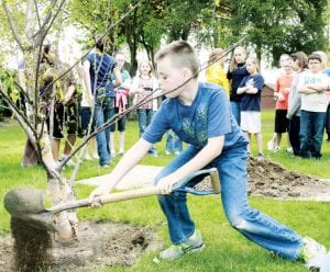 Bailey Pflager, an Archbold Middle School fifth grade student, helps plant a birch tree in Ruihley Park to commemorate Arbor Day, Friday, April 20.