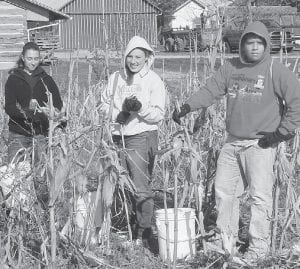 Taylor Kruse, Adi Bruner, and Chris Thuma, Pettisville High School seniors, from left, picked corn in the Sauder Village 1910 homestead area as part of the PHS annual Senior Service Day, Monday, April 23.– courtesy photo