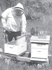 Phil Lange wears a protective jacket and hood while working with some of his bee colonies, or hives. Honeybees face challenges from several sources, including mites, viruses, and pesticides.– photo by David Pugh