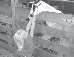 Taylor Wachtmann, Archbold, was enjoying the animals at the Henry County Fair in Napoleon, Monday, Aug. 12. This handsome goat was begging for some attention and Taylor was glad to give it. Wachtmann is the 2 1/2-year-old daughter of John and Jessica.–