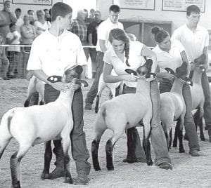 Animal judging is an important part of the fair. In the ring with their sheep are, front row, from left, Noah Brinegar, Fayette; Kelsey Weirauch, Pettisville; Maddy Richer, Wauseon; and Jered Seiler, Fayette. In the back is Wade Burkholder, Fayette.– photo by David Pugh