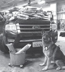 "Pharaoh, the Wauseon police canine, with the sport-utility vehicle stopped on Sunday, Dec. 31, 2017, near the Archbold- Fayette exit on the Ohio Turnpike. Piled on the hood and in the bucket are 70 pounds of marijuana found in the SUV. Pharaoh ""alerted"" to the presence of drugs in the vehicle, which resulted in the search and the arrest of a California man.– courtesy photo"